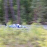 Anzio - 24h du Mans 2019-20